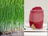 L: Wheatgrass for shots! R: Raw houmous and beetroot ravioli