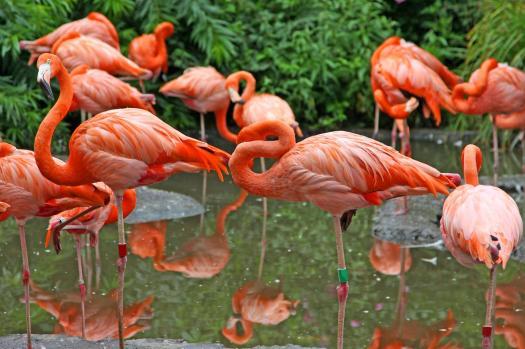 flamingos-one-leg